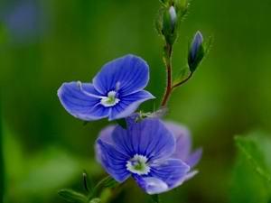 основы фотографии цветы малая ГРИП ЭФР 67 мм, f/4