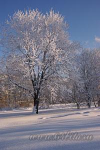 Пейзаж дерево снимок
