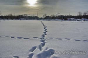 Как снимать пейзаж зима фото
